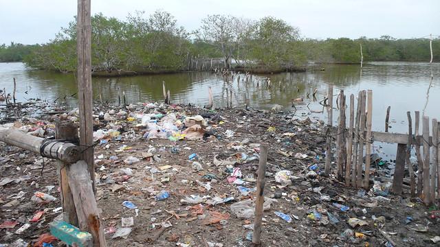 ¿Cómo ayudar a cuidar el medio ambiente desde tu casa?