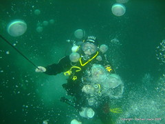 Chris on the Shotline of the Laurentic (damoj5) Tags: inon fujif40 laurentic donegaldiving