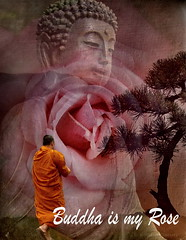 Buddha is my Rose (h.koppdelaney) Tags: life light art rose digital photoshop self symbol path buddha monk buddhism philosophy mind meditation wisdom quest consciousness symbolism psychology archetype theravada graphicmaster
