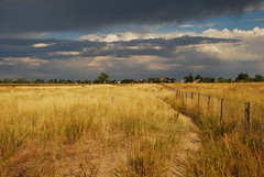 Dry field and impending rain (Let Ideas Compete) Tags: park summer usa dog brown storm color nature field grass weather yellow clouds america fence dark us scenery colorado unitedstates flat path ominous threatening united gray tan atmosphere dry trail co vegetation vista louisville essence states prairie vistas plains dogpark grassland davidson plain arid mesa atmospheric grassy inclement leashless