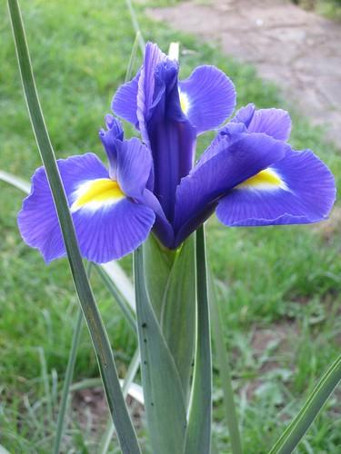 lilies0089
