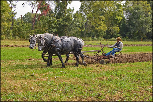 Horse Drawn Plow
