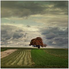 Lonely tree (pixel_unikat) Tags: autumn red tree fall field square landscape austria colourful niederösterreich loweraustria weinviertel 500x500 notexture vanagram saariysqualitypictures thedantecircle pixelunikat
