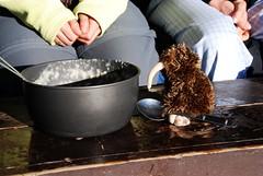 Kiwi genießt (?) seinen Haferbrei