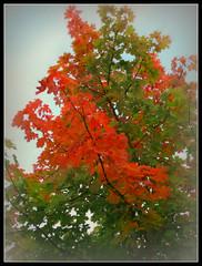 645 Colors of Tree (Nebojsa Mladjenovic) Tags: light red mist france color tree art nature digital outdoors lumix burgundy panasonic bourgogne arbre priroda soe morvan fz50 drvo yonne svetlost mladjenovic