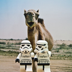 Lost in Saudi Arabia (KWG73) Tags: animal square lost toys starwars october lego camel photoaday stormtrooper saudiarabia pictureaday project365 kwg73 2009288365 inifig