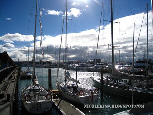 auckland yachts