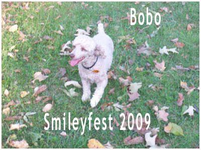 60-Bobo---3