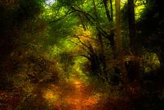 Autumn walk to Milomeri - V 2.0 (n.kouvaros) Tags: autumn mountains nature forest nikon cyprus trail waterfalls 2009 naturetrail troodos d60 platres millomeri milomeri