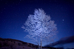 Stars Rime on Trees (masahiro miyasaka) Tags: christmas blue winter white snow ice japan stars star december hoarfrost astrophotography lonelytree    rimeontrees  rimeice   impressedbeauty hardrime