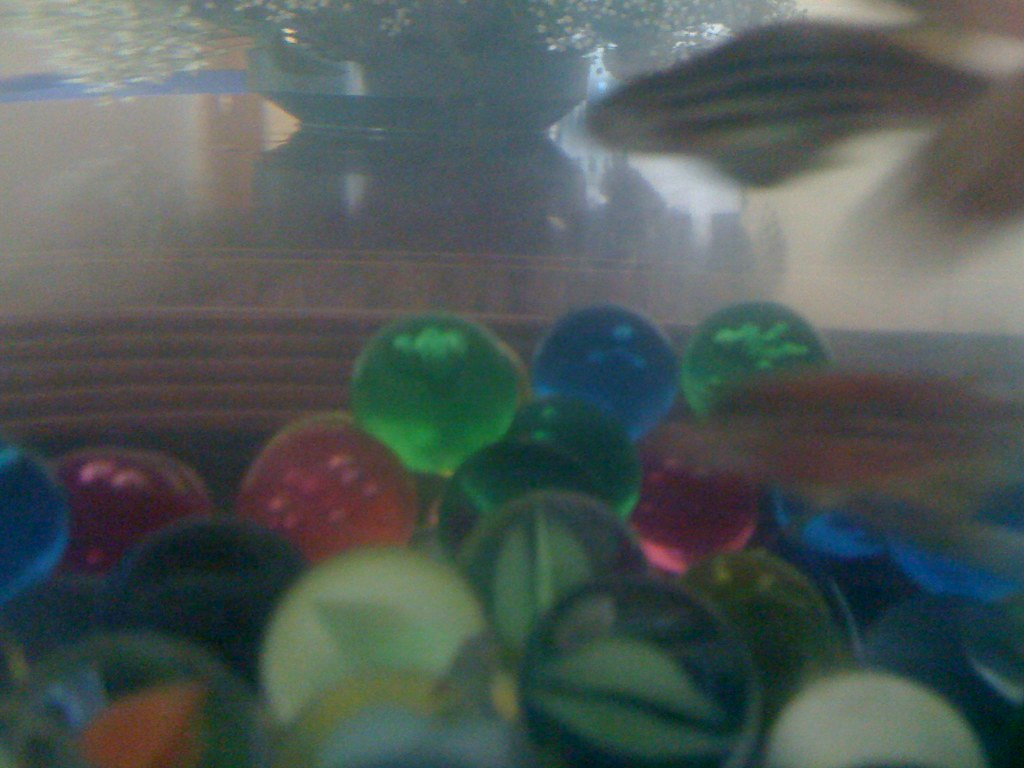 The world 39 s best photos of goldfish and pregnant flickr for Fish dream meaning pregnancy