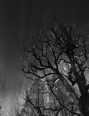 tree naked (F_blue) Tags: longexposure tokyo fuji etrs zenzabronica neopan400presto 善福寺公園 zempukujipark zenzanonpe5028 fblue2008