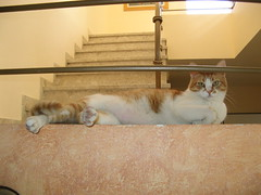 IMG_2951 (Levana's Cats =^..^=) Tags:   levana   shifman