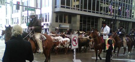 Stock Show Parade (2)
