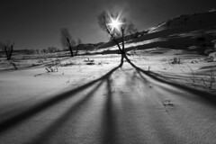 ( Ali Shokri / www.alishokri.com) Tags: trees winter light shadow bw snow mountains nature landscape iran azerbaijan tabriz 123bw wwwalishokricom alishokri