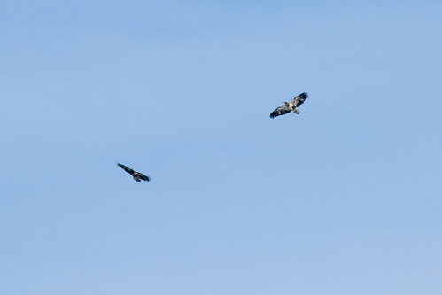 Eagles Along the Bluff