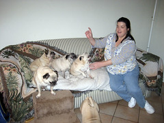 sandy directs the pugs