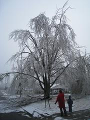 Ice Storm 2009