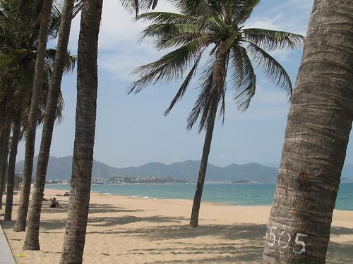 Palm trees lean