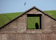 Still lonely... (durtcom) Tags: landscape countryside alberta views commute owl prairie prairies msh granary allbymyself msh0510 canonpowershots3is msh051012