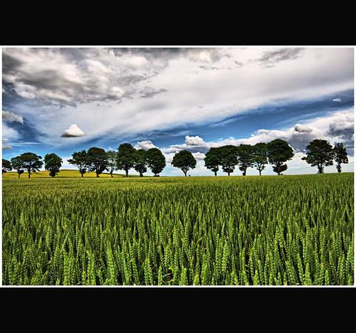 http://farm4.static.flickr.com/3484/3728079896_9de01458d6.jpg