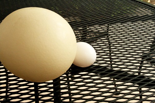 Ostrich egg/chicken egg