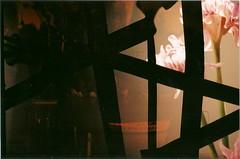 Flower (jasminfish) Tags: bridge brazil cats colors brasil boats island lomo lomography barcos mask ponte es ilha wrecked máscara vilavelha colorido lomografia gambiarra 3ponte experiência morrodomoreno redscale fujisuperiaiso100 praiadoribeiro muitascores holga135bc