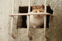 Gato Preso (Diego Martin) Tags: dog animals fauna cat san can perro v gato antonio cartagena gaviota regin