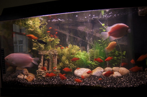 tropical fish tank decorations. Fish Tank Decor