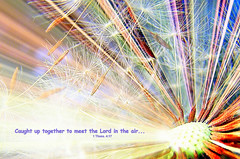 Meeting in the Air! (Heart Windows Art) Tags: macro flying air jesus saints meeting away lord dandelion seeds bible comfort rapture verse hallelujah anawesomeshot thesuperbmasterpiece inspiredbyhim graphicmaster heavenlycaptures thessalonians417