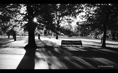 Shadow cocktail (pic fix) Tags: trees light blackandwhite bw sun london monochrome canon bench greenwich ambient sunburst canon5d greenwichpark ef24105mmf4lisusm