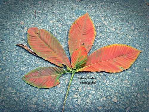 autumn leaf on the floor