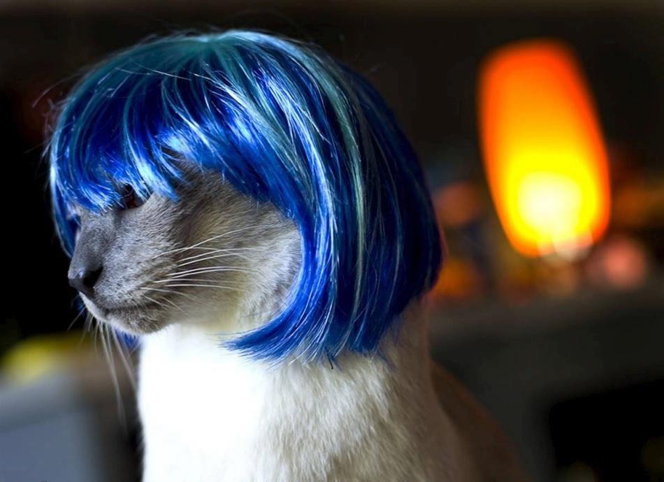 cat-glamour-09