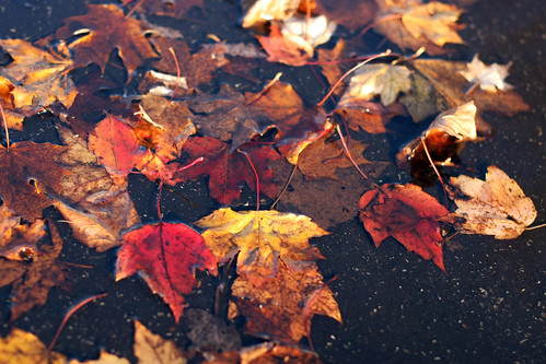 puddle leaves
