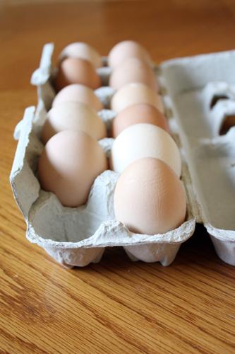 eggz.