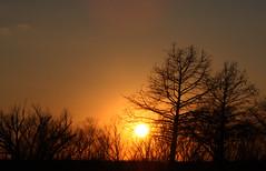 Bright as Day (TPorter2006) Tags: tporter2006 dallas january 2008 texas day pfogold pfosilver tree sun medal