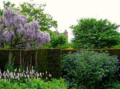 Sissinghurst Castle Garden (UGArdener) Tags: pink england green castle english garden sissinghurst kent spring purple unitedkingdom britain may lavender nationaltrust middleages wisteria springtime drizzle foxgloves hedges englishgardens vitasackvillewest sissinghurstcastlegarden walledgardens gardenrooms sirharoldnicolson englishtravel