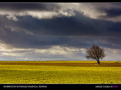 INVIERNO EN EL PRAMO (PALENCIA. ESPAA) (Miguel_CD) Tags: cloud tree landscape paisaje rbol nube castilla palencia pramo eos40d 70200lf4is goldstaraward worldwidelandscapes