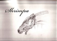 Step 1 horses (Shrimpa) Tags: horses horse art sketch artistic drawing