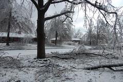 Front yard after (laurienrick) Tags: ice nature icestorm damage arkansas sweetgum naturaldisaster springdale january2009 icestorm2009