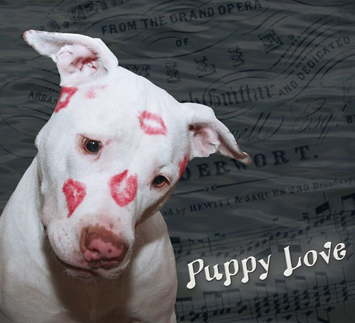 Kissy Face White Puppy Dog Love, Kahuna Luna covered in Lipstick Kisses for Valentine's Day & 1st Birthday