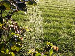 Spider Silk (gairid1791) Tags: web spiderweb spidersilk