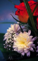 ان راح عـمري لك.. فلا هو خساير (M ï M ï) Tags: birthday flowers red 2 orange green yellow friend day best special gift 19 2009