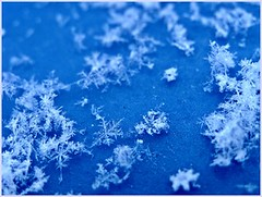 snow... (ania_vespertine) Tags: blue winter white snow fourseasons wonderland fragile 4seasons supershot theloveshack