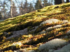 Lilla Tallbacken, mossa (dr_Peel) Tags: lilla tallbacken lillatallbacken