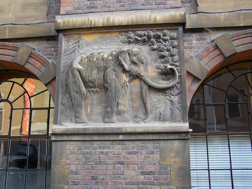 Mammoth, Sedgwick Museum of Earth Sciences, University of Cambridge