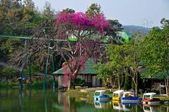 city trip travel people elephant thailand zoo aquarium nikon asia tour north free tourist chiangmai dennis sites globus d300 iamcanadian worldtravels dennisjarvis archer10 dennisgjarvis