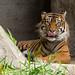Woodland Park Zoo Seattle 054