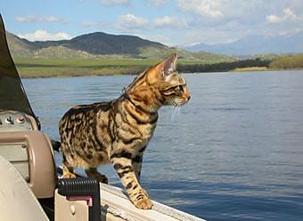 autumn_boat_balancing