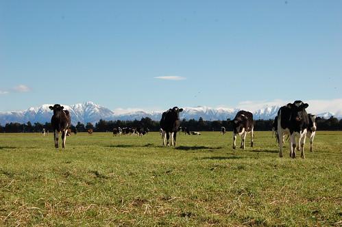 Nueva Zelanda: Granja Joel en Ashburton